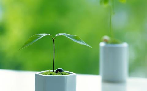 小植物壁纸