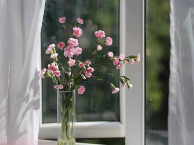 粉色的康乃馨