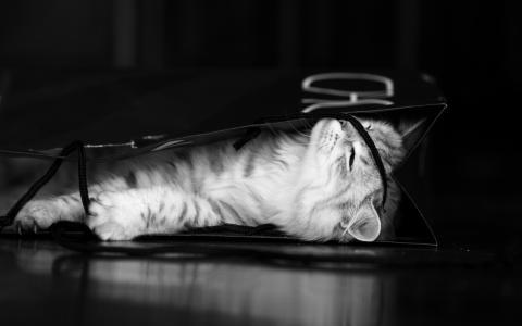 可爱的小猫壁纸