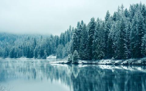 斯诺伊湖森林壁纸