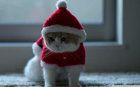 圣诞节猫壁纸