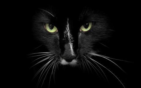 黑猫与绿色的眼睛壁纸
