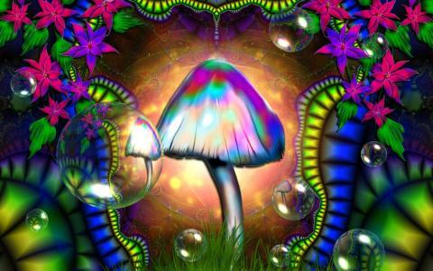 丰富多彩的蘑菇壁纸