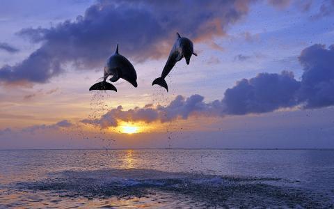 海豚跳入空气壁纸