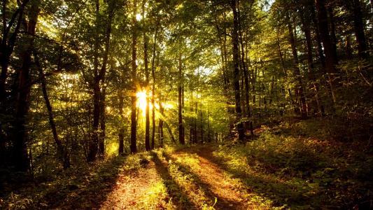 森林高清壁纸