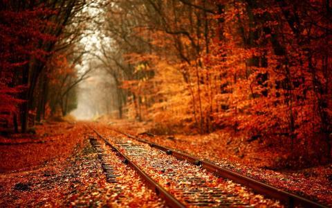 秋天的风景壁纸