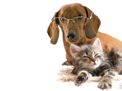 小猫和狗壁纸