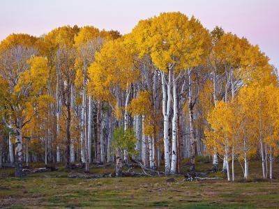 秋季泛黄的树林景色