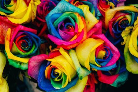 五彩斑斓的玫瑰
