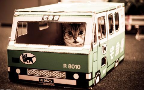 猫巴士壁纸