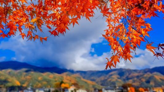 初秋时节的唯美枫叶