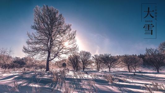 大雪时节森林树木美景