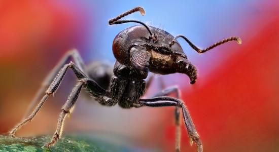 蚂蚁关闭了壁纸