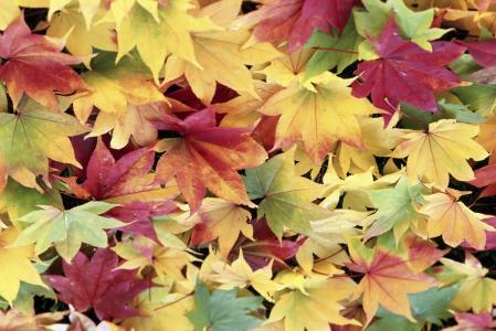 多彩的秋天树叶壁纸