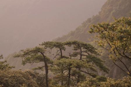 雾锁黄山迷人景色