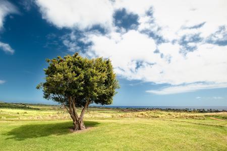 蓝天下的大树