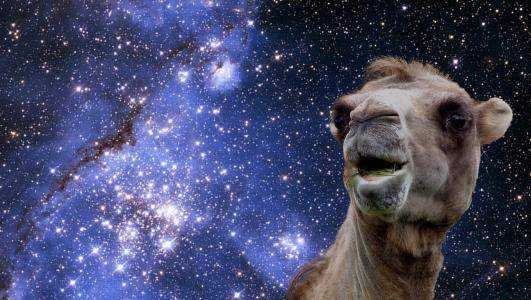 太空骆驼壁纸