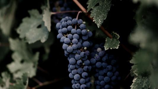 美味诱人的葡萄