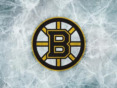 波士顿熊壁纸