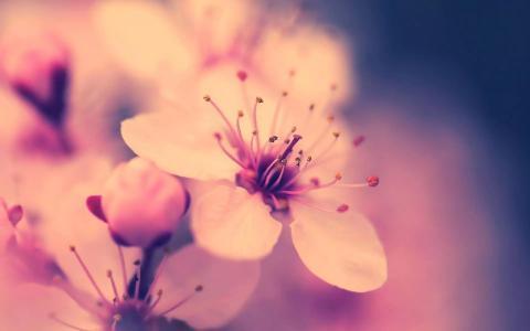 花卉照片过滤器壁纸