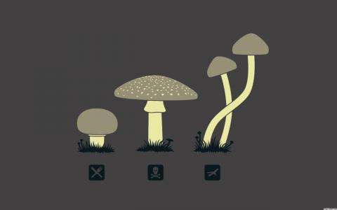 魔法蘑菇壁纸