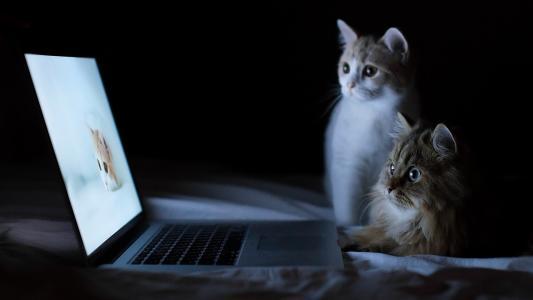看着监视器高清壁纸的猫