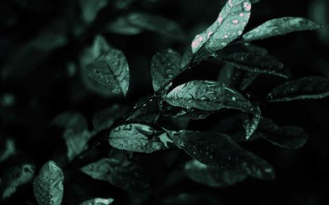 湿的叶子壁纸