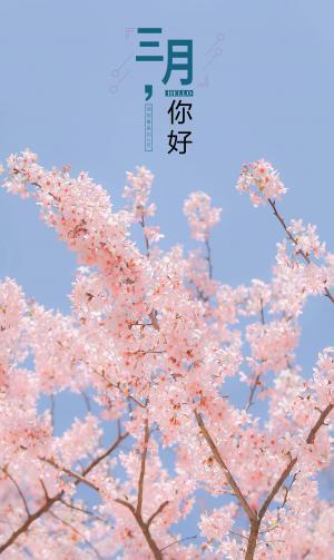 三月你好浪漫唯美樱花