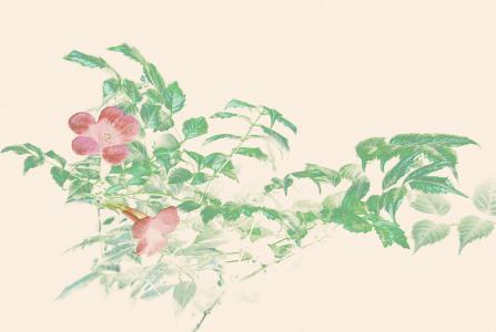 中国风手绘凌霄花
