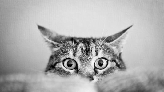 猫隐藏高清壁纸