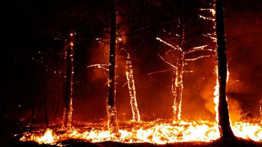 燃烧的树高清壁纸