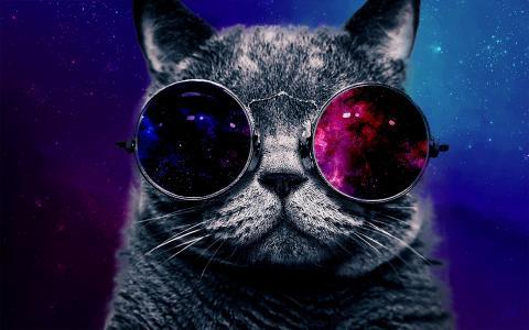 大眼镜壁纸的猫