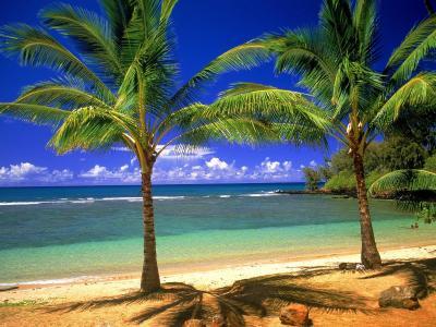 热带天堂壁纸