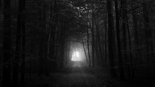 黑色和白色的黑暗森林高清壁纸