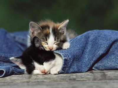 小猫睡觉壁纸
