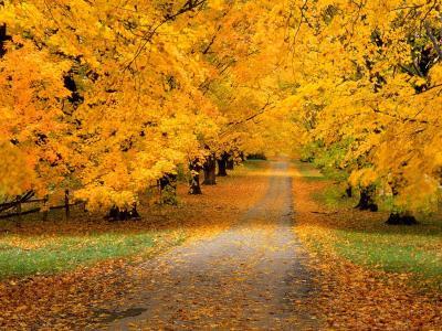 秋天的壁纸