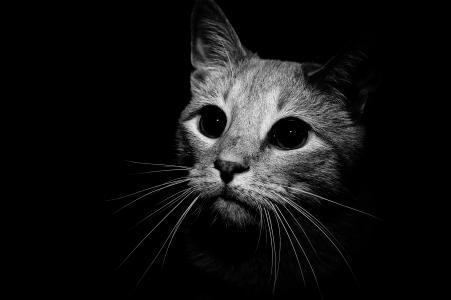 猫在黑色和白色的壁纸