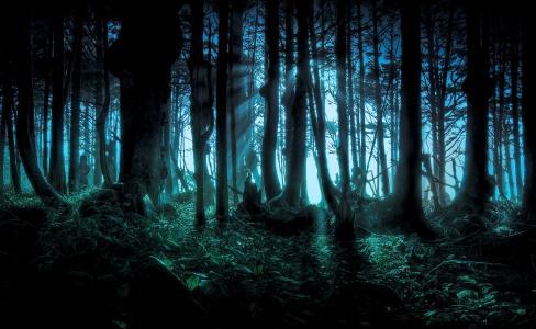黑暗的恐怖森林壁纸