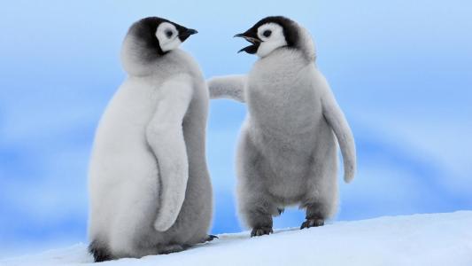 宝贝企鹅高清壁纸
