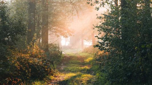 清晨林间小径美丽景色