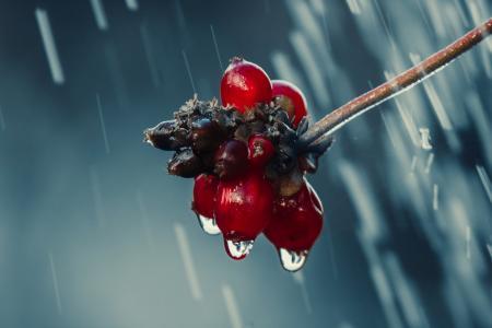 白露秋雨凉